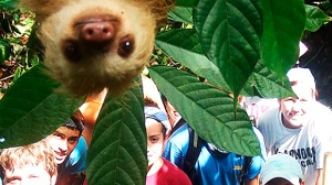 Now I want to go to COSTA RICA  - Sloths are generally thought to be slow creatures.  But one limelight-loving sloth wasted no time when it dropped in on a group of tourists taking a holiday photo in Costa Rica.