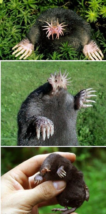 best 25 ugly animals ideas on pinterest ugly monkey