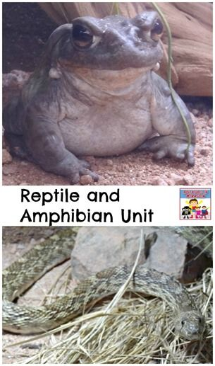 Reptile and Amphibian unit