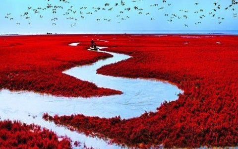La plage rouge (Panjin, Chine)