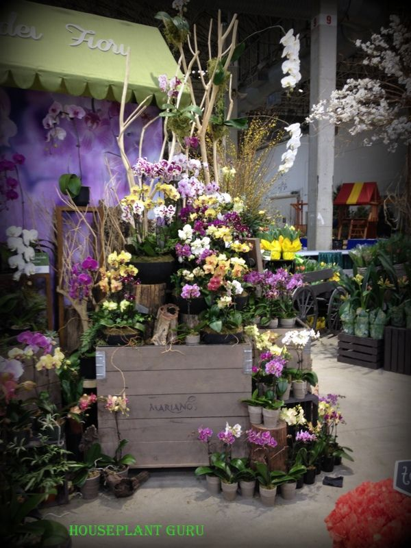 Mariano orchid display at the chicago flower show chicago flower and garden show 2015 for Chicago flower and garden show