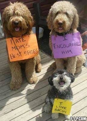 I ATE MOM'S BEST SHOES, sayeth Doggie one's sign..... I ENCOURAGED HIM!, Doggie two!