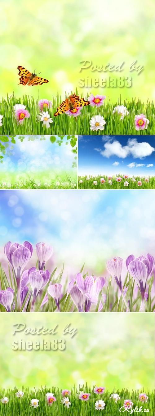 Весенняя природа - зеленая трава, цеты и голубое небо
