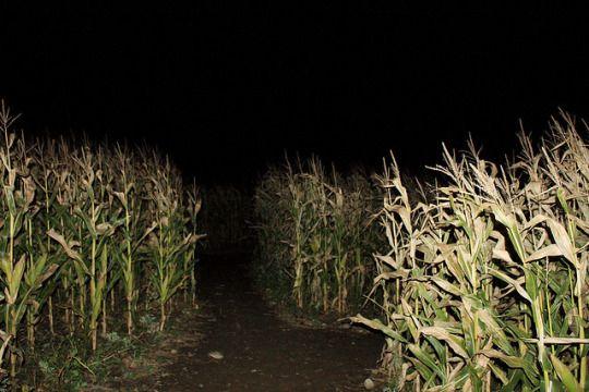 Marini's Corn Maze by lehcar1477 on flickr