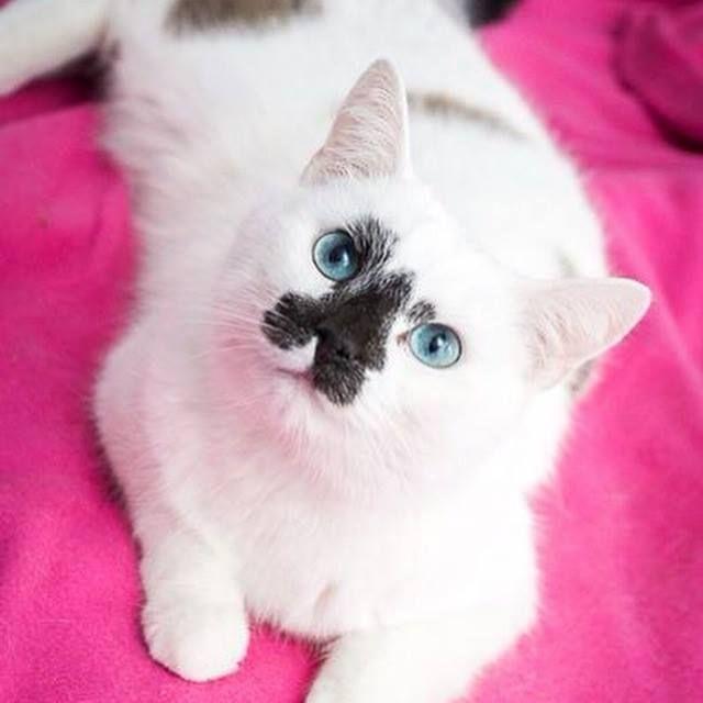 Mejores 849 imágenes de A Cats World en Pinterest | Gatitos, Cute ...