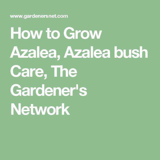 How to Grow Azalea, Azalea bush Care, The Gardener's Network