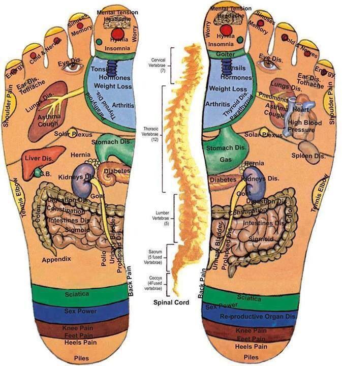 Organspiegel der Füsse