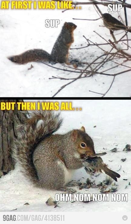 Carnivore Squirrel: Animals, Squirrels, Funny Shit, Funny Stuff, Funnies, Humor, Things