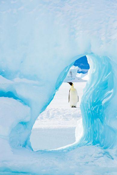 Emperor penguin, Weddell Sea (Antarctica) - via Carolina de Heine.