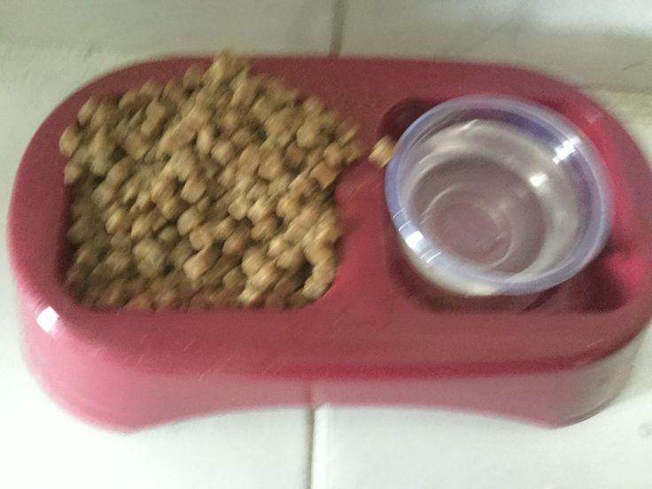 Comidas para perros recién nacidos