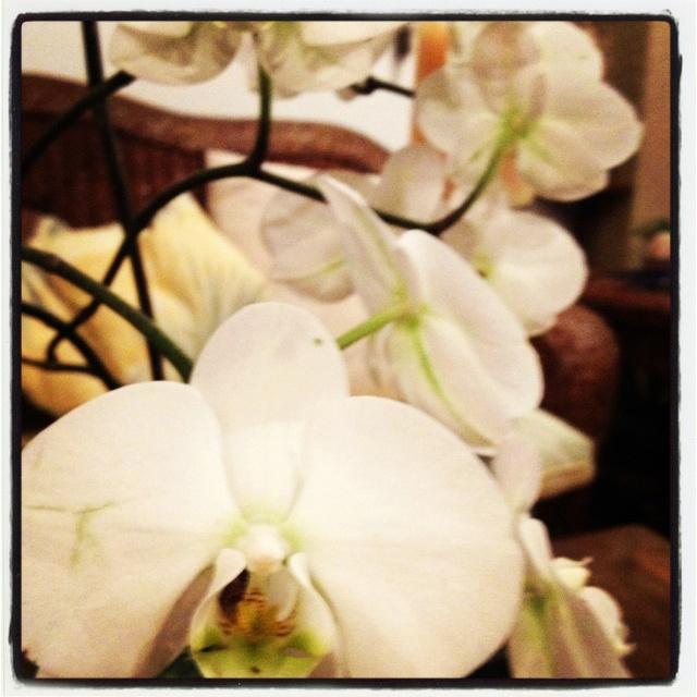 Orquideas: Orquidea