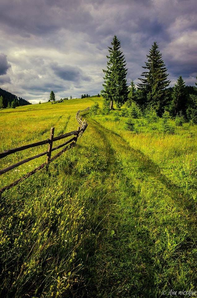Summer in Bucovina county, Romania, www.romaniasfriends.com (by Iliu Nicolae)