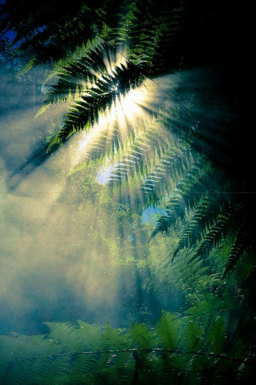 ♂ Amazing nature light ray through the green