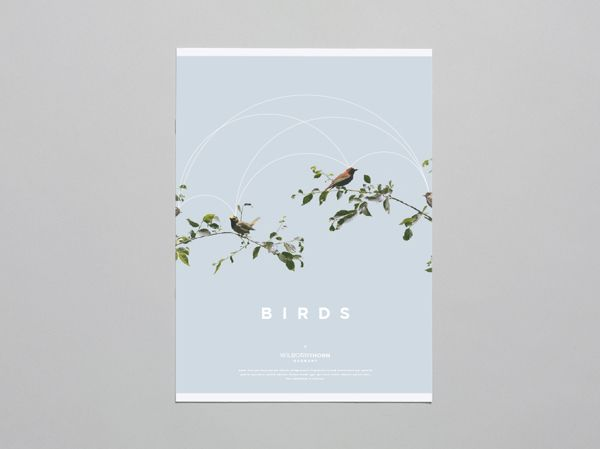 Birds by Brandon Nickerson, via Behance