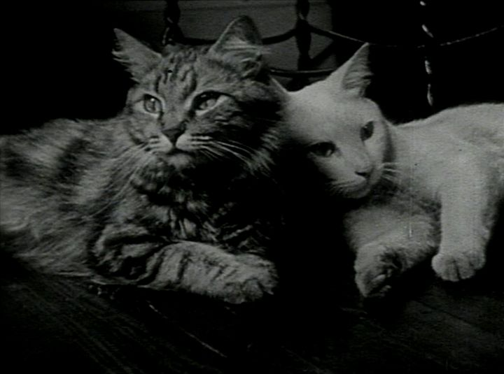 """The Private Life of a Cat (Alexander Hammid and Maya Deren, 1944) """"This film is dedicated to cats. Not in grateful recognition of services rendered, for they neither lend themselves to our sport, nor provide us with material benefits, nor flatter us with lavish affection. Without accepting any master, they live in a friendly, independent, equitable peace with man. For this rare talent, which man himself still labors to achieve, we pay them homage."""" - Maya Deren"""