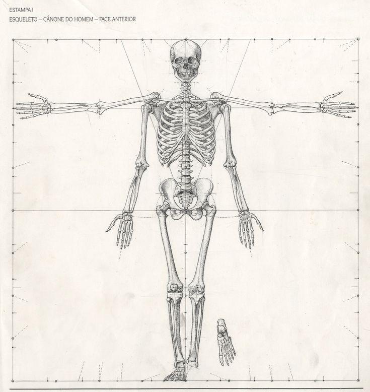 ESQUELETO – FACE ANTERIOR 1. Fonte: TAVARES, Eduardo. Anatomia Artística: construção plástica do corpo humano. Porto: Edições Asa, 1994, p. 111.   2. Fonte: RAYNES, John. Figure Drawing &am…
