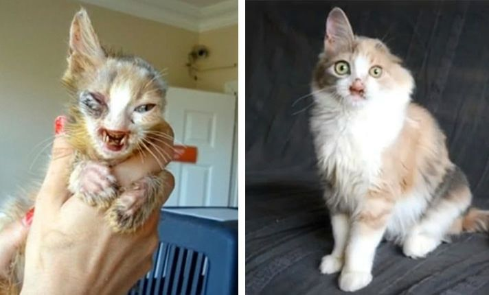"""Little Girl With Heart Of Gold Helps Disfigured Cat When No One Else Would 