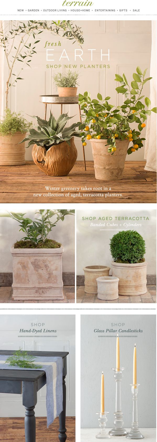 Winter greenery takes root in our new collection of aged #terracotta #planters at #shopterrain January 12