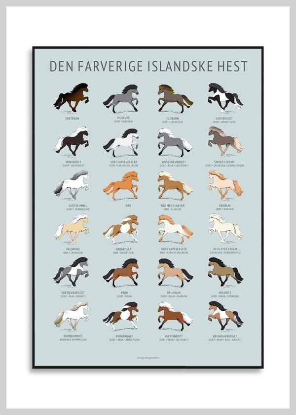 Hesteplakat: Den farverige islænder fra Ping Pong Posters