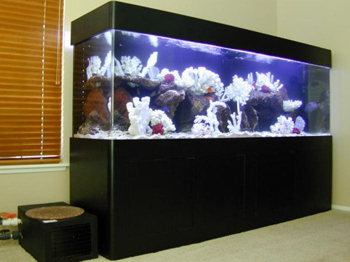 17 Best Ideas About 300 Gallon Aquarium On Pinterest