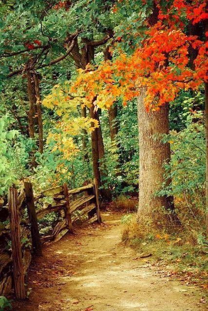 Het bospad dat Mevrouw Verona koos had een enorme hellingsgraad. Velen komen naar dit bospad om te mountainbiken. Vroeger ging Meneer Pottenbakker naar dit pad om de verziekte bomen te kappen als brandhout. Wanneer het winter was sleeëden de 2 geliefden van de berg af. Als Verona nu op het pad staat roept dit allemaal mooie herinneringen op.