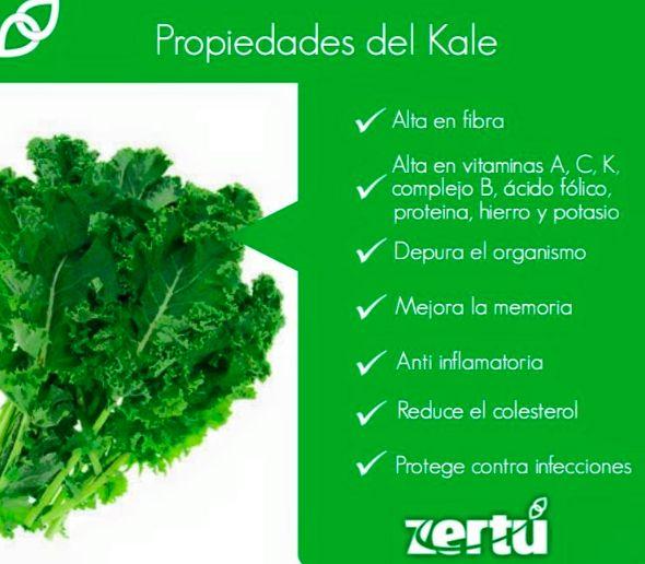 """El KALE es una de las verduras más nutritivas y, a la vez, desconocidas. Le llaman kale en inglés y """"col verde"""", """"col crespa"""" o """"berza"""" en español. Es prima hermana del brócoli, la coliflor y de las coles de Bruselas. Algunos la consideran uno de los vegetales más sanos del planeta. Su nombre científico es Brassica oleracea y es originaria de Asia menor. #NessZertú #foodie #foodporn #recetas #ayurveda #saludable #zertumismo #felicidad"""