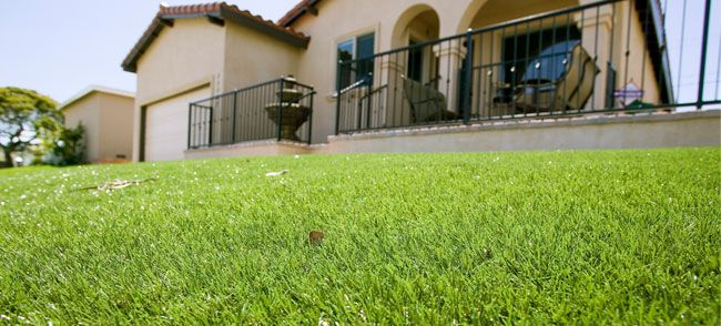 How to seed your lawn (different instructions for thickening, repairing bare spots, or starting from scratch)