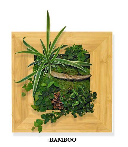 54 best Living Walls, Indoor Plant Design images on Pinterest ...