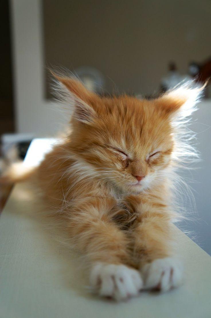 54 besten katzen bilder auf pinterest k tzchen lustige katzen und hund katze. Black Bedroom Furniture Sets. Home Design Ideas