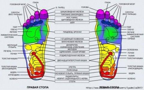 """Рефлексогенные точки на стопах    Стопа - это область, богатейшая нервными рецепторами и через нее можно получить доступ к любой части тела. Каждая точка стопы """"отвечает"""" за свой орган: кончики"""