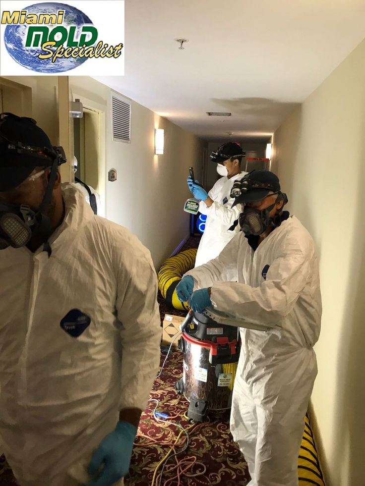 Miami Mold Specialist is unlike any other #mold #remediation #company in #Miami. Our #team of mold #inspectors & #microbial #experts are #fully #devoted to earning your trust.  When you choose Miami Mold Specialist, you choose a team with an unparalleled level of mold expertise & training.