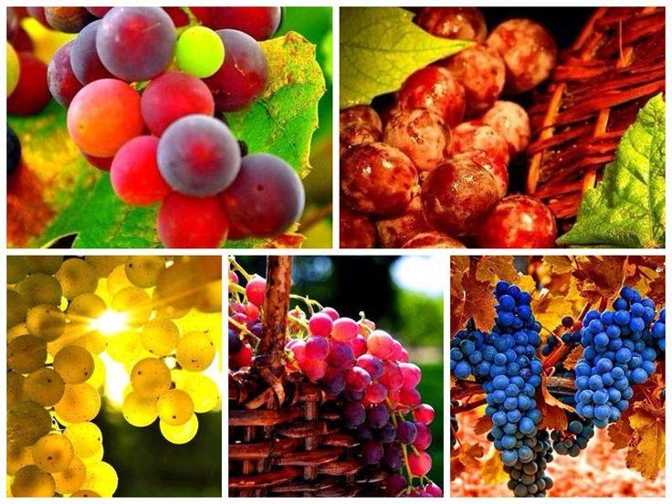Как красив и полезен виноград Итак, чем же полезен виноград? 1. В ягодах винограда содержится много глюкозы и солей калия. Виноград и свежеприготовленные виноградные соки, как и щелочные воды, усили...