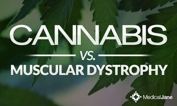 Cannabis Shows Promise for Treating Symptoms of Muscular Dystrophy