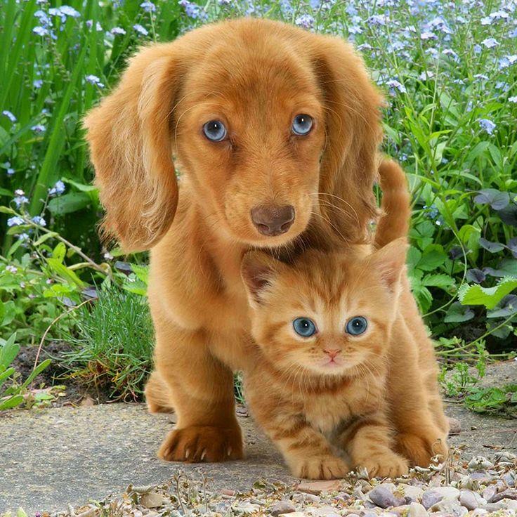 Cães e gatos gemeos. Não somos irmãos não, só amigos.