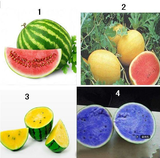Different Type of Watermelon Seeds Fruit Seeds Rare by Greenworld1