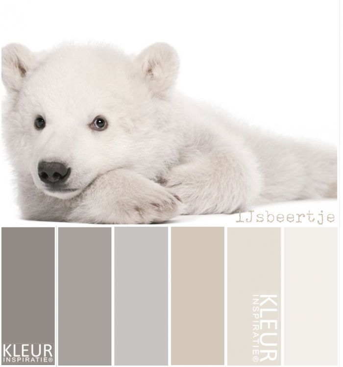 Bear colours #shadesofanimalpaintcolours