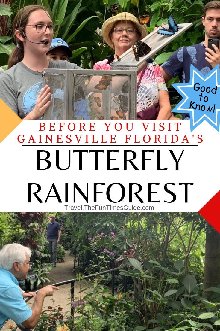 What It S Like Visiting The Butterfly Rainforest Museum In Gainesville Florida Tips To Get The Most From This Unique Butterfly Conservatory What Is Like Gainesville Florida Kids Vacation