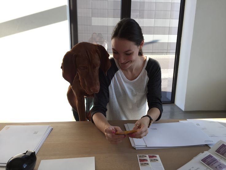 Now let's see if she's putting on the right stamps …  #bossmo #officedog #vizsla