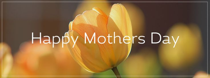 Happy #MothersDay from all at Create #mother #mum #mummy #mom #love #kind #caring #family #tulip #flower