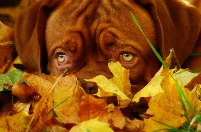 Autumn dog, Images of dog