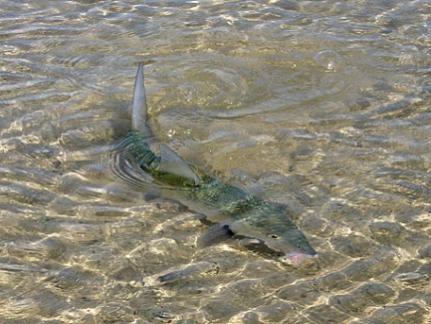 Fly fishing fishing in cuba spinning fishing in for Fishing in cuba