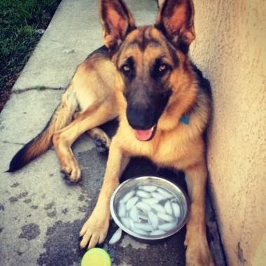 This team of pros specializes in providing dog walking and pet sitting services. They offer doggy day care and pet taxi as well. Take a look at their page if you want to know their dog walking prices.