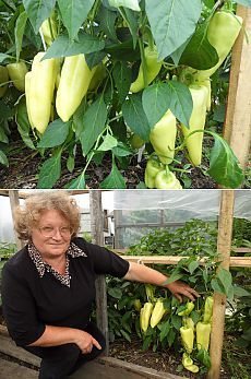 Прищипнешь рассаду-увеличишь урожай перцев.