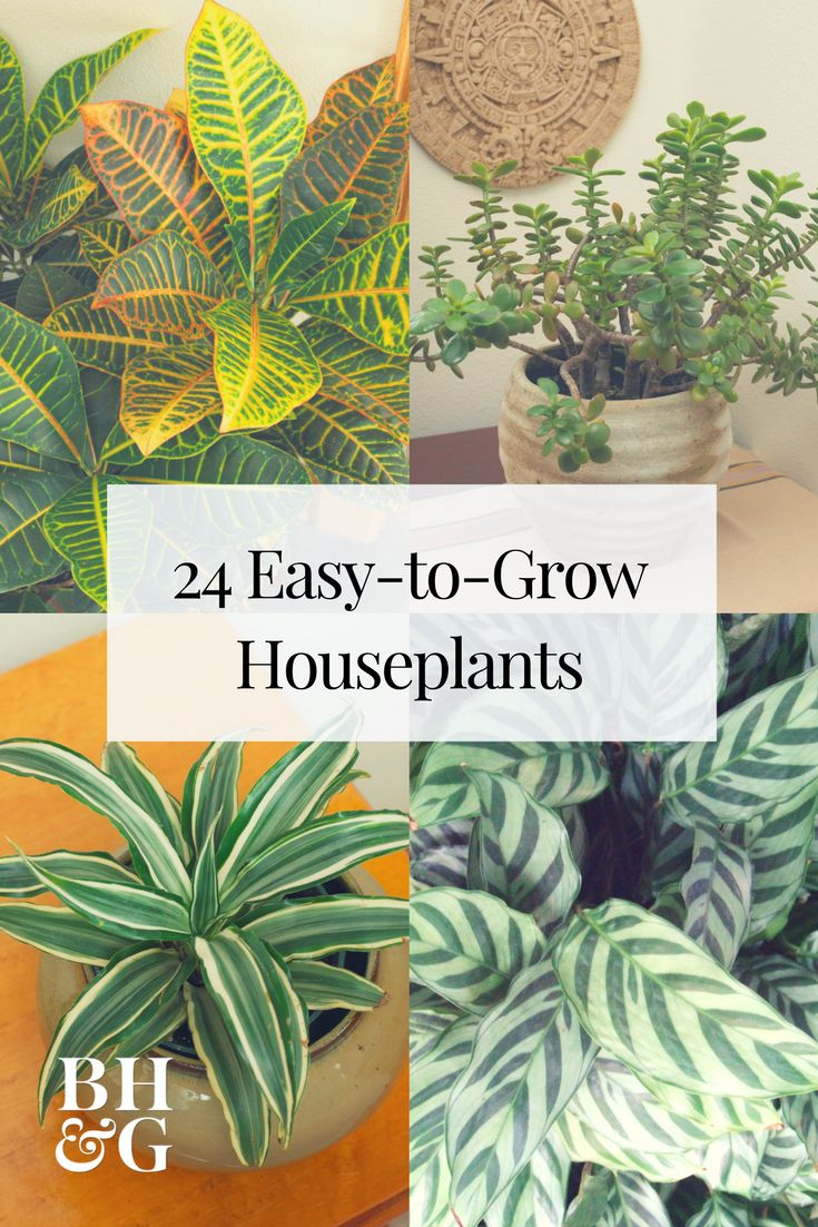 Easy to grow houseplants are perfect for those of us who are forgetful waterers. We're sharing 24 of the easiest houseplants to grow that will add greenery and life to your space. These fun, fuss-free plants won't leave you discouraged. #plants #indoorplants #indoorgardening