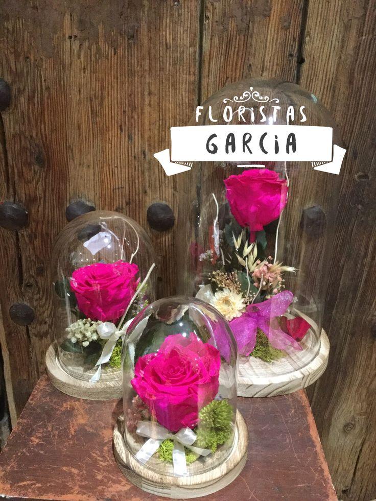 Cúpulas rosas eternas