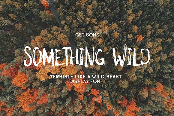 Something Wild ~ Display Fonts on Creative Market
