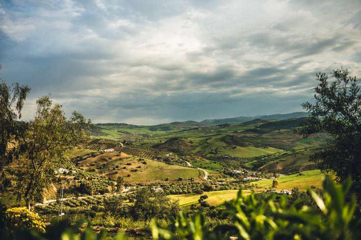 View from our olive farm. #fincalacolina #Alora #Spain #Espania