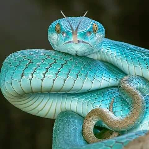 Hermosa naturaleza animal reptil serpiente azul