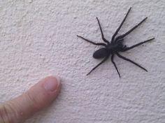 Les 599 meilleures images du tableau trucs astuces sur - Remede contre les araignees ...