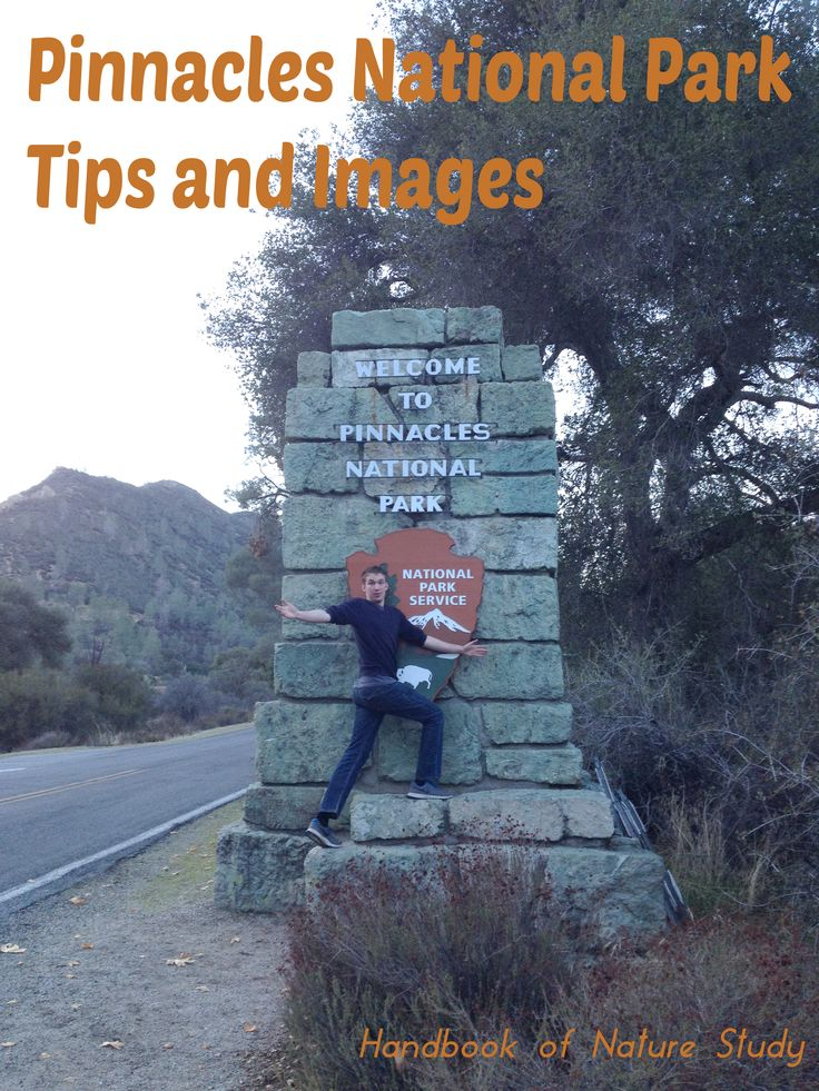 Pinnacles National Park Tips and Images @handbookofnaturestudy